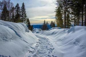 sendero en la nieve foto