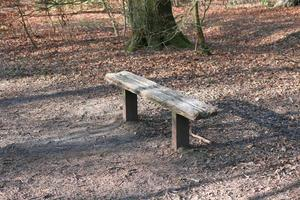 wooden bench on a dirt path photo