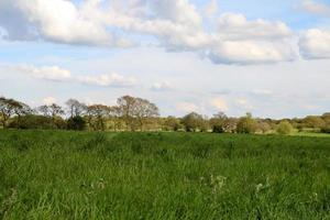 Farming Crops and Trees photo