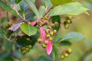 buds on a tree photo