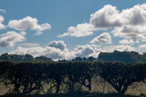 Hedge and Blue Sky photo