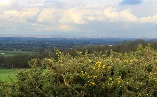 Gorse Bushes and Countryside photo