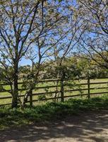 campos y valla de madera. foto