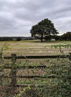 valla de madera y árbol en el campo foto