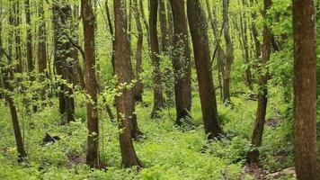 Wet alder forest and green fern summer landscape video