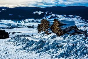 troncos apilados bajo la nieve foto