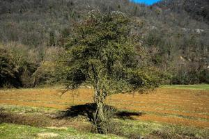 árbol y cero foto