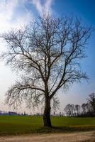 árbol entre la vegetación foto
