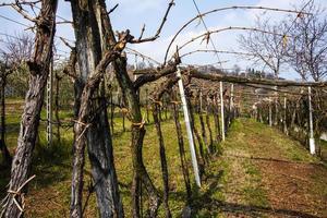 20210313 vineyards in winter photo