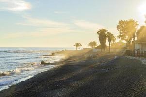 sunbeams on the beach between palm trees photo