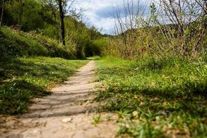 202144 camino de montemezzo entre la vegetación foto