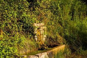fuente en vegetacion foto