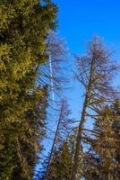 Trees and sky photo