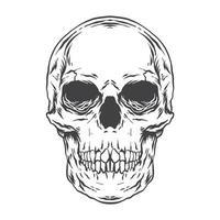 Human skull handrawn illustration monochrome vector