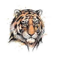 Portrait of a tiger head from a splash of watercolor hand drawn sketch Vector illustration of paints