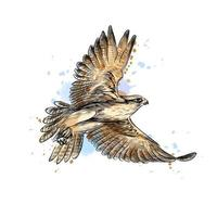 Falcon in flight from a splash of watercolor hand drawn sketch Vector illustration of paints