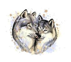 Portrait of wolves from a splash of watercolor hand drawn sketch Vector illustration of paints