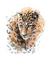 Portrait of a leopard from a splash of watercolor hand drawn sketch Vector illustration of paints