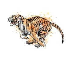 Tiger running from a splash of watercolor hand drawn sketch Vector illustration of paints
