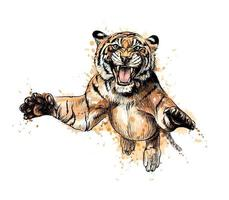 Portrait of a tiger jumping from a splash of watercolor hand drawn sketch Vector illustration of paints