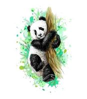 Panda baby cub sitting on a tree from a splash of watercolor hand drawn sketch Vector illustration of paints