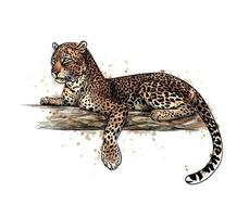 Leopard is lying on a tree from a splash of watercolor hand drawn sketch Vector illustration of paints