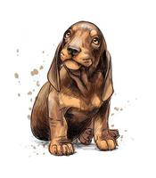 Dachshund puppy from a splash of watercolor hand drawn sketch Vector illustration of paints