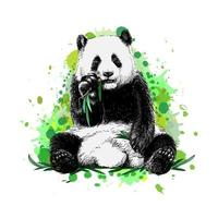 Panda sitting and eating bamboo from a splash of watercolor hand drawn sketch Vector illustration of paints