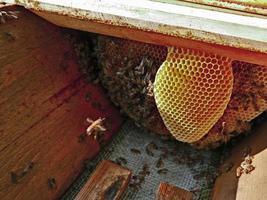 Hive with breeding bee nest photo