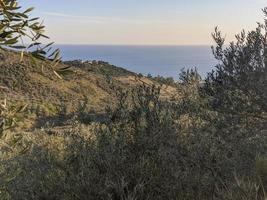 Coast and mountains of Liguria, framed by olive trees photo