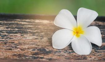 White Plumeria flower on old wooden floor For background photo