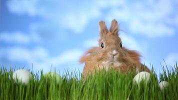 coelhinho da páscoa sentado na grama com ovos video