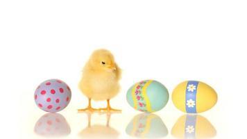 ovos de páscoa e pintinho, com áudio video