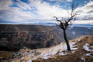 Tree in Ihlara, Turkey photo