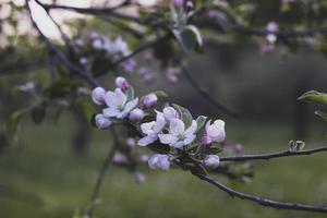 purple flower in tilt shift lens photo