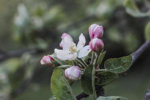 white and pink flower in tilt shift lens photo