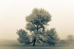Fine art image of a tree in nature and foggy conditions photo