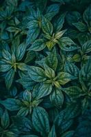 green plant leaves in spring season photo
