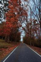 road in the mountain in autumn season photo