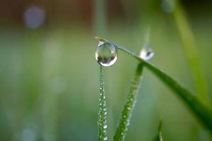 caer sobre la hierba verde en los días de lluvia foto