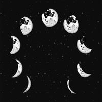 nine moon phases vector