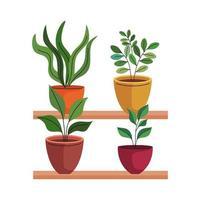 bundle of four house plants in ceramic pots over shelf vector