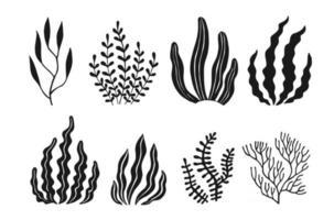 conjunto de iconos de algas marinas se aíslan las plantas vector