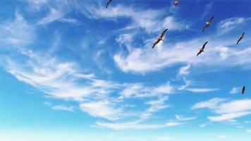 dag blauwe hemel en passerende wolken met migrerende vogels 4 k-beeldmateriaal cumulus wolken tegen de blauwe hemel blauwe lucht wolken migreren vogels video