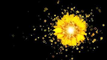 pétalas de flores amarelas caindo conceitos 3D na vista de cima lindas flores amarelas pétalas de flores caindo na temporada de primavera com a forma do coração simples de imagens de amor flores da temporada de primavera video