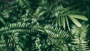 Tropical green leaf in dark tone photo