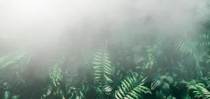 jardín vertical con hoja verde tropical con niebla y lluvia tono oscuro foto