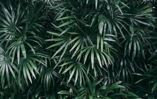 Vertical garden with tropical green leaf Dark tone photo