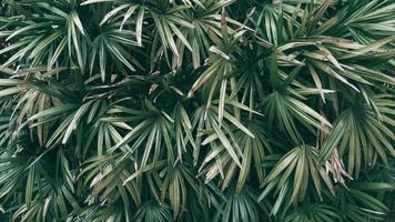 Tropical green leaf background Dark tone theme photo