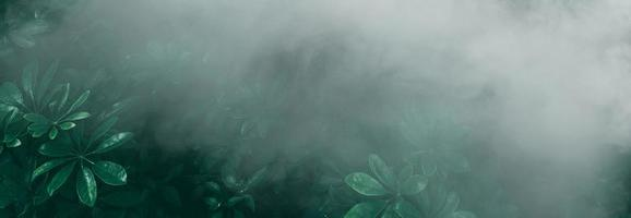 Vertical garden with tropical green leaf with fog and rain Dark tone photo